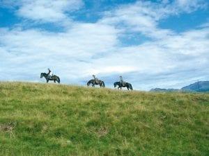 Compiano_cavalli
