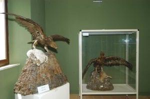 Sarnano_Museo dell'avifauna