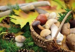 varese ligure funghi