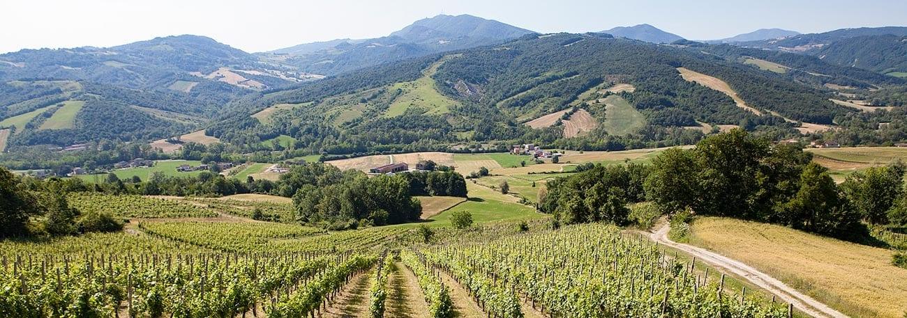 L'Associazione del Vin Santo di Vigoleno DOC